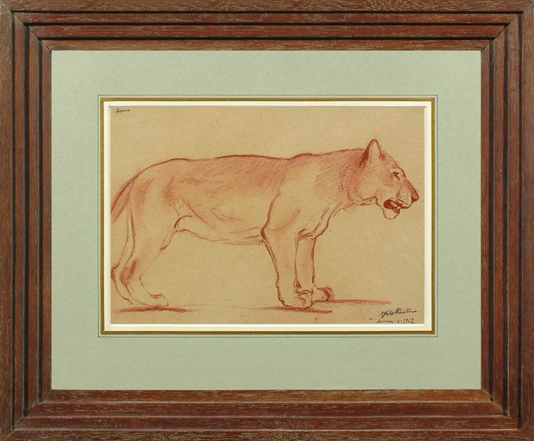 GEORGES FELDKIRCHNER Study of a lioness